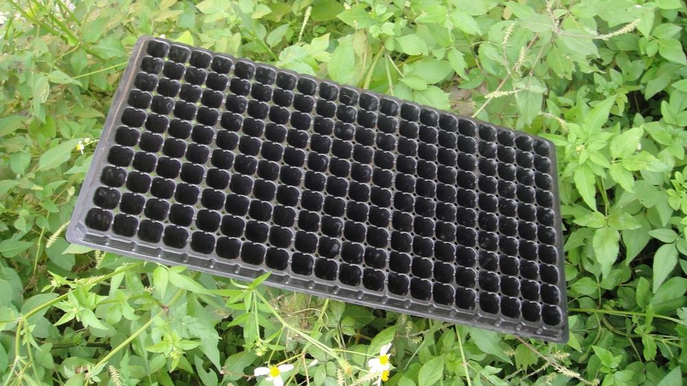 plastic agriculture seeding trays 200 holes nursery tray buy 200 holes nursery tray200 holes nursery tray200 holes nursery tray product on alibabacom