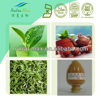 Wild tea seed powder 50%-90%Tea Saponin