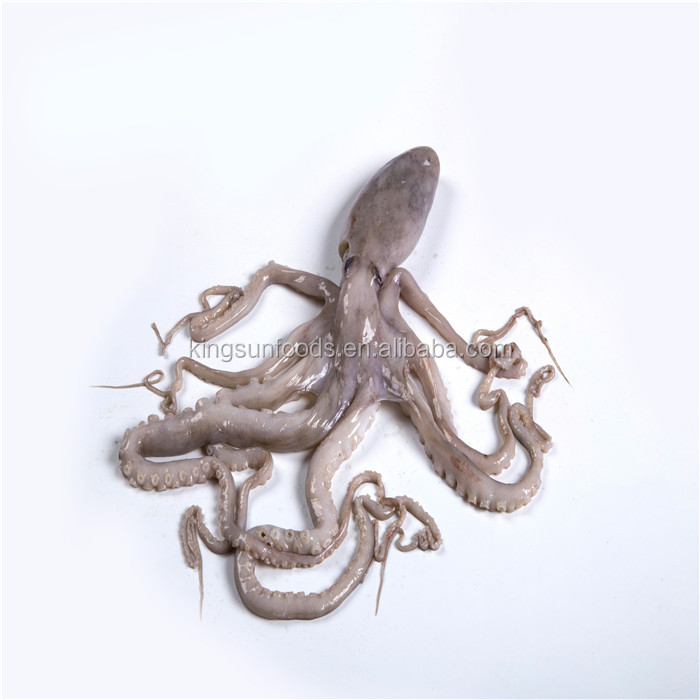 Hot Sale Fresh Frozen Octopus Big size