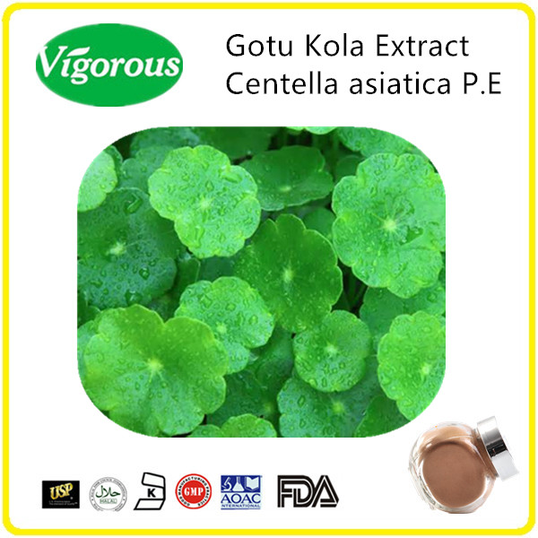 total triterpenoids / pure natural Gotu Kola Extract triterpenes /centella asiatica 10% - 98% Asiaticoside