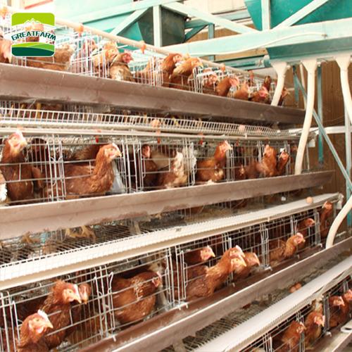 Galvanizado nido de huevos de gallinas ponedoras, Nido de Pájaro precio jaula