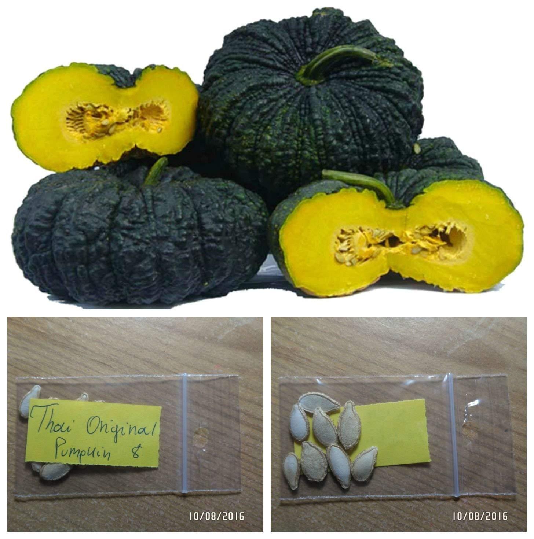 Thai Original Pumpkin ''Kang Kob'' ~8 Top Quality Seeds - Rare - Extra Sweet