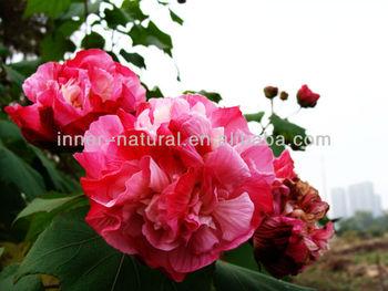 Isogmp Factory Hibiscus Flower Extract Hibiscus Rosa Sinensis