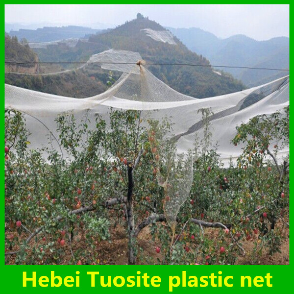 pe anti hail net for orchard apple ,hail protection nets,hail guard net