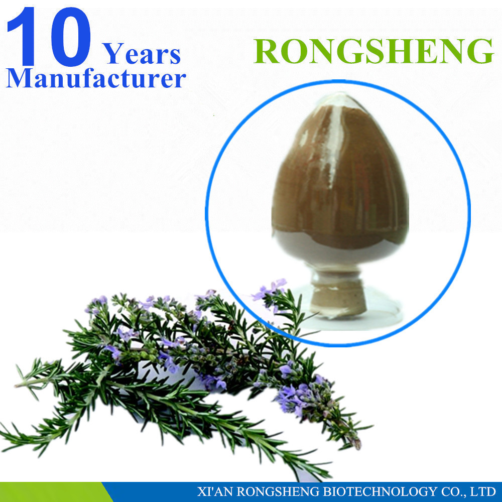 Factory Supply Organic Rosemary Leaves Powder 10:1