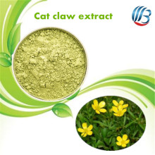 LanBing supply organic cats claw extract ranunculus ternatus thunb cat's claw extract