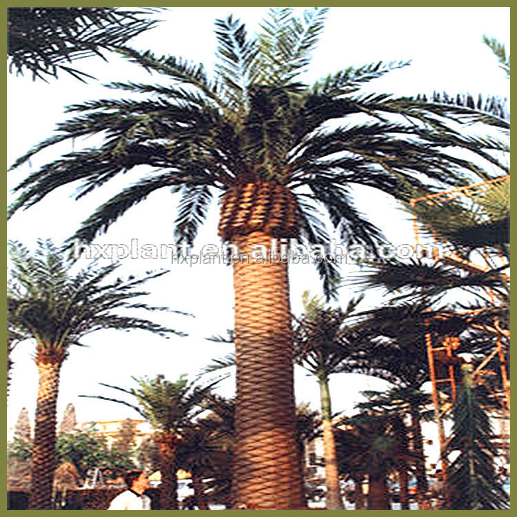 Outdoor artificial date palm saudi arabia palm tree tops date palm prices
