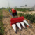 China widely used grain reaper binder/wheat reaper /mini rice paddy cutting machine