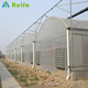 Economic Multi Span Poly Tunnel Greenhouse China