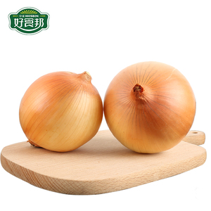 fresh onion importers in dubai and garlic and fresh onion wholesale