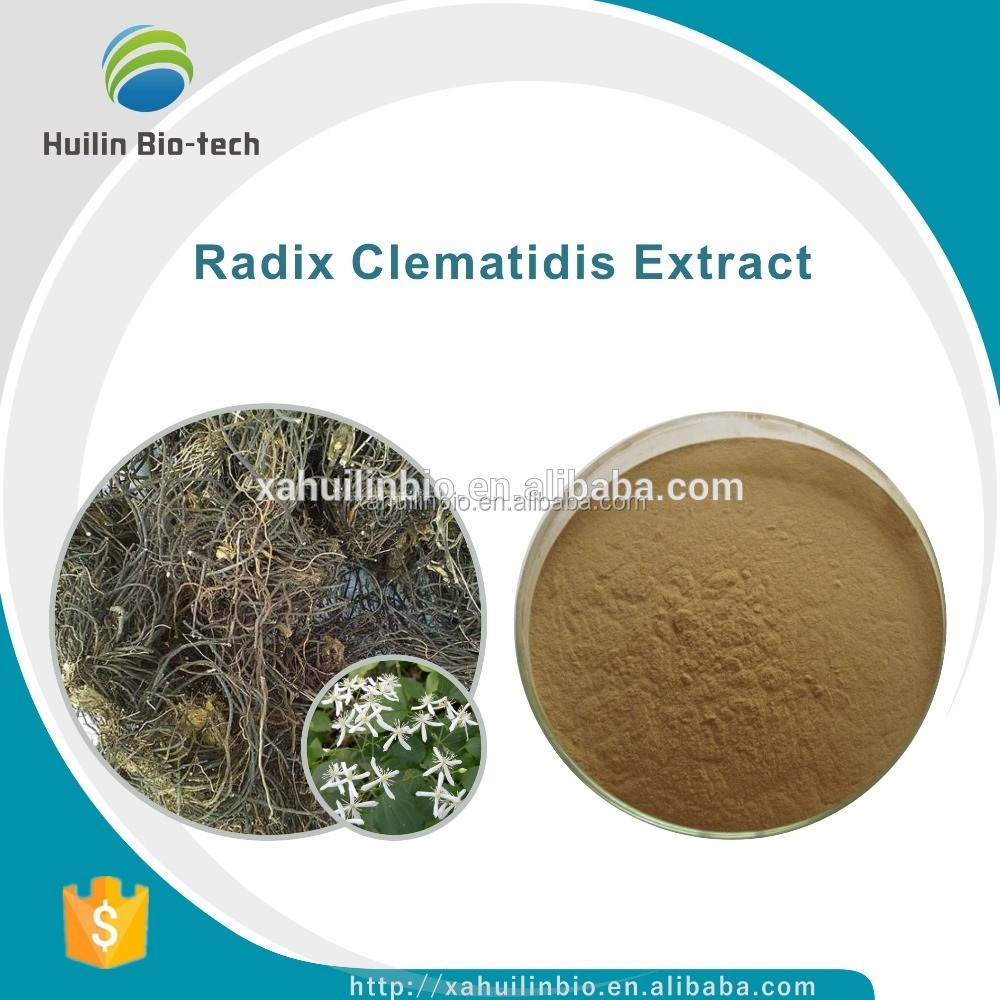 High Quality 10:1, Radix Clematidis P.E./Radix Clematidis Extract Powder