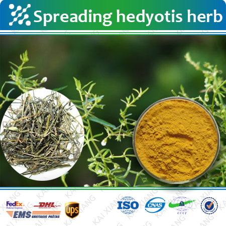 Factory Supply Hedyotis diffusa/oldenlandia/Spreading Hedyotis Herb/vagina tightening herbs 5:1 10:1