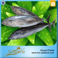 Hot Selling 18 months Shelf Life Fresh Frozen Bonito Sea Fish
