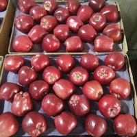 Juicy apple fruit export Gansu Origin Fresh Fruit Red Delicious Huaniu Apple