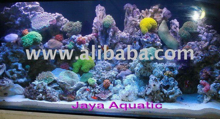 Specialist Marine Aquarium