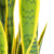 28 Leafs Potted Artificial Latex Sansevieria Plants