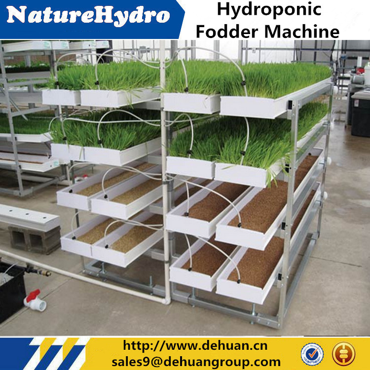 Automatic Pasture Seeding Tray Machine Hydroponic Fodder Tray
