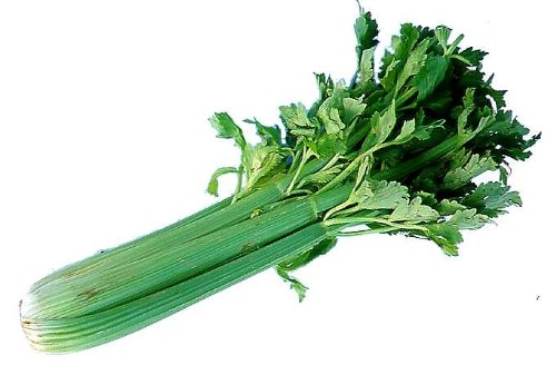 CELERY FRESH PRODUCE LARGE FRUIT VEGETABLES PER BUNDLE (1)