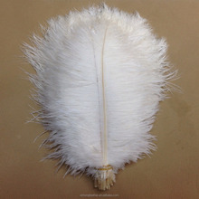 Wedding decorations Wholesale 18 to 20 inch white Ostrich Feather natural feather for sale