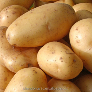 best fresh holland potato price for potato buyers
