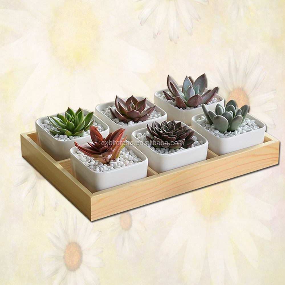 wooden planter box succulent plants in pots