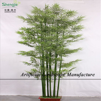 Stunning Indoor Bamboo Plants For Sale Contemporary - Amazing ...