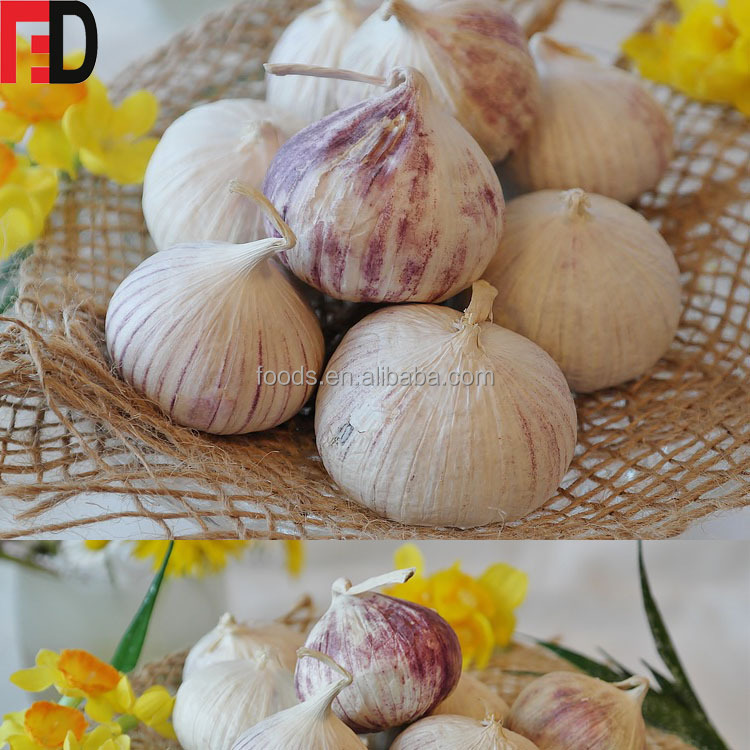 Current price of chinese garlic, frozen peeled garlic bulk, yunnan solo purple garlic