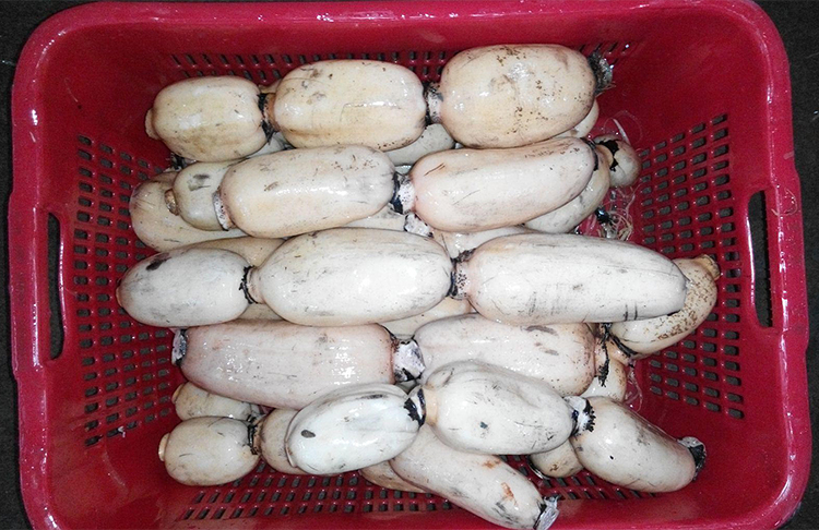 Chinese Fresh Vegetables Supplier Lotus Root