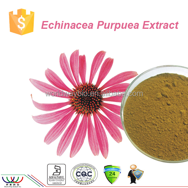 free sample ! China balancing blood sugar & blood fat echinacea herb p.e 4% polyphenols