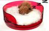China made modern design waterproof durable acrylic pet bed