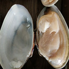 frozen boiled yellow short necked clam on time delivery