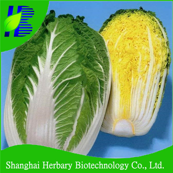 High cold resistance HT NO.1 Chinese cabbage seeds for sowing