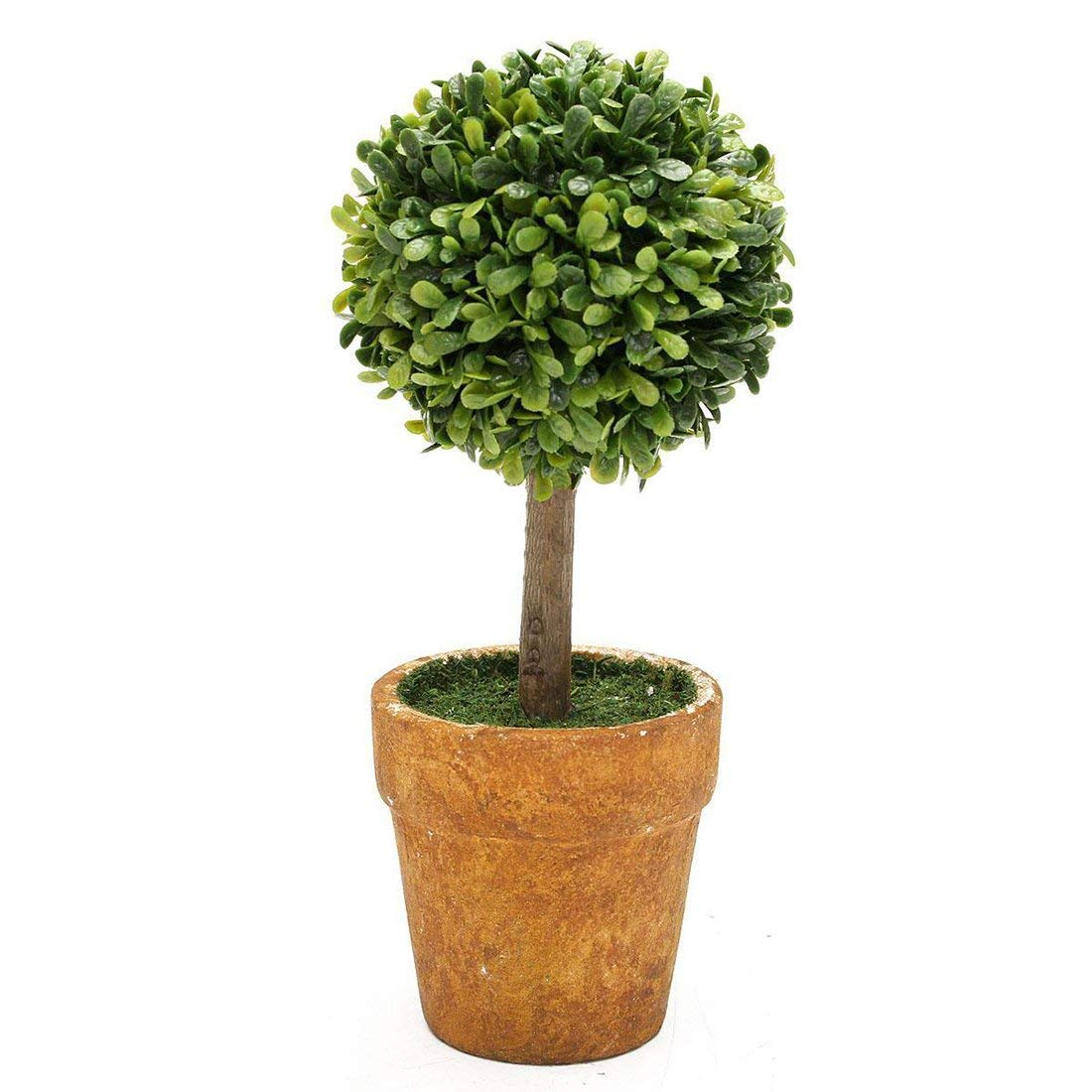 Cheap Small Trees For Pots find