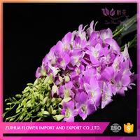 planting base provide directly orchids wedding flowers for dealer