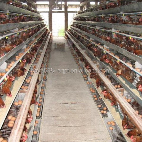 Hot selling Africa chicken cage for sale automatic chicken layer cage