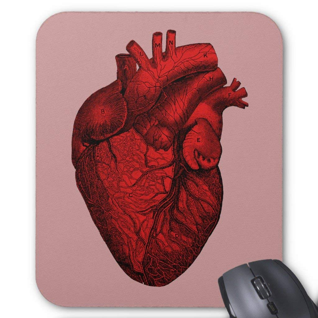 Cheap Anatomical Human Heart Find Anatomical Human Heart Deals On