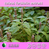 100% natural coleus forskolin extract
