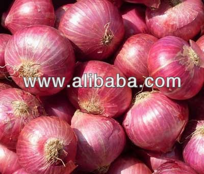 Fresh red Onion Supplier from India