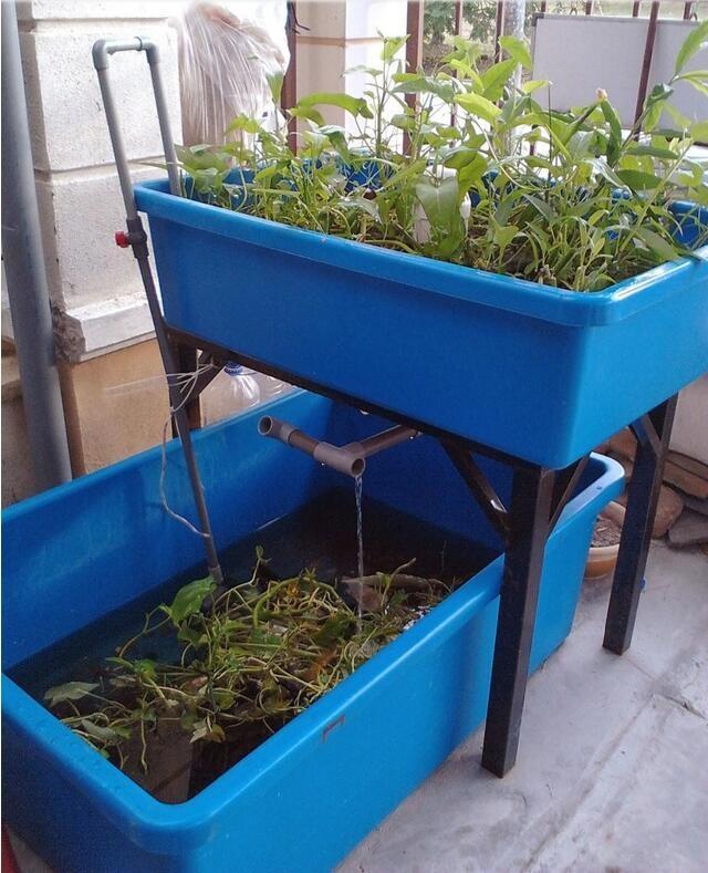 New Design 500l Plastic Fish Tubs Grow Bed Aquaponics Plastic Troughs For Hydroponics