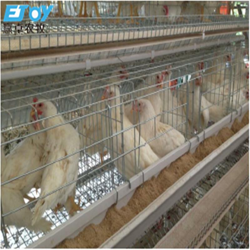 ไก่ Poultry Farming House อุปกรณ์