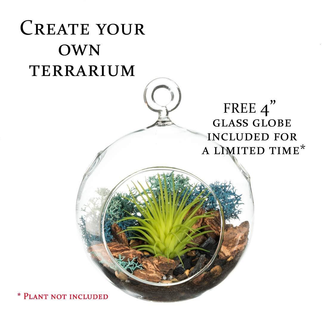 Cheap Diy Terrarium Find Diy Terrarium Deals On Line At Alibaba Com