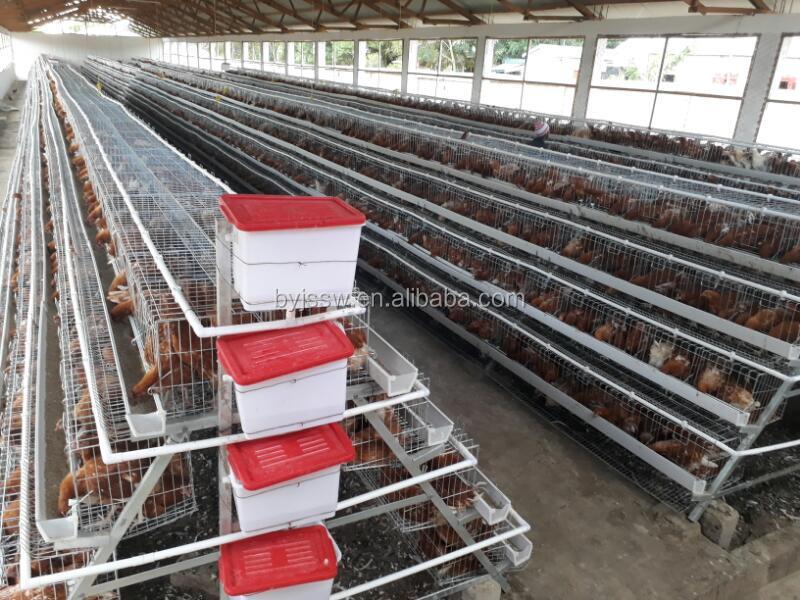 chicken cage-662