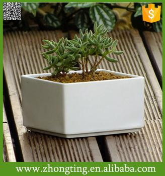 Accueil Decoratif Populaire Petit Pot De Fleur En Gros En Ceramique