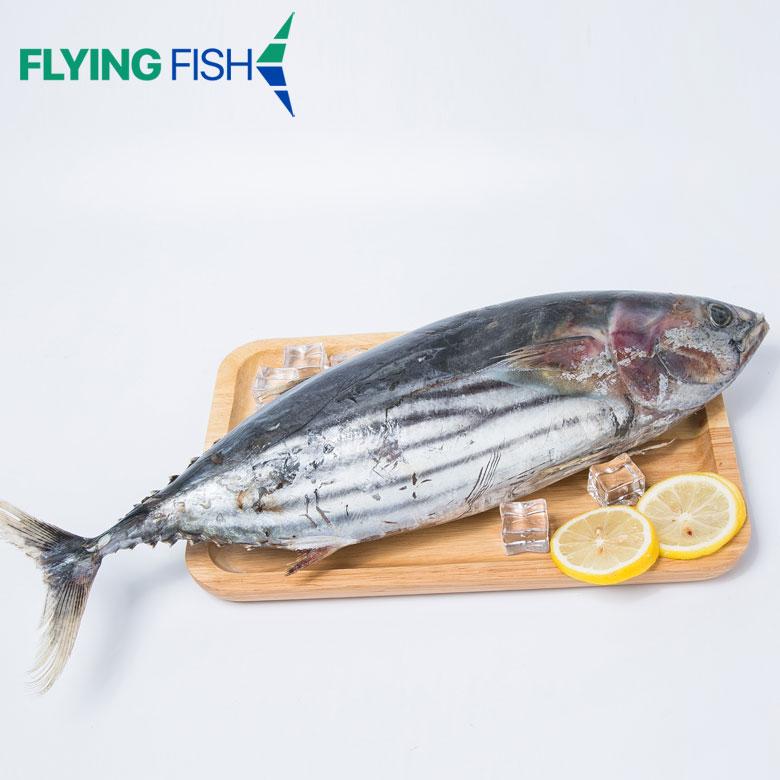 Seafrozen tuna wholesale for bait frozen skipjack fresh tuna for bait