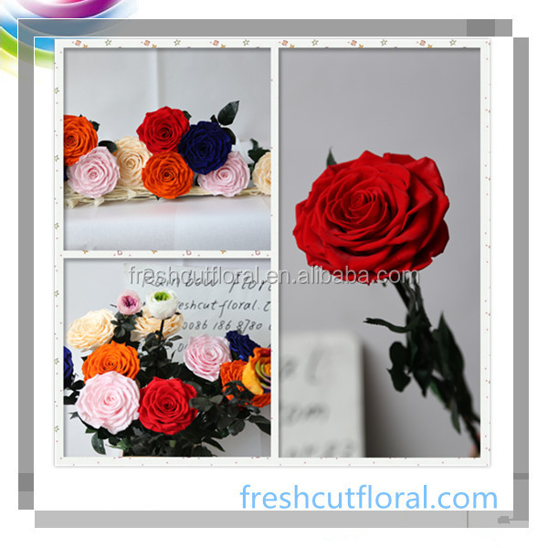 Professional Supply Ecuador Preserved Roses And Fresh Floral For Party Decoration From Kunming