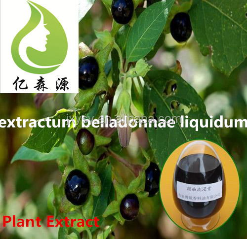 100% Natural Plant Extract Organic Extractum Belladonnae Liquidum Bulk Prices Belladonna For Reliving Pain