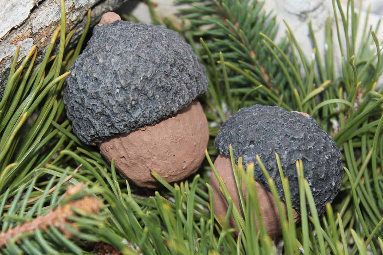 Formation Creation Inc. Ceramic Acorns for Fireplace, fire Pit, Stove