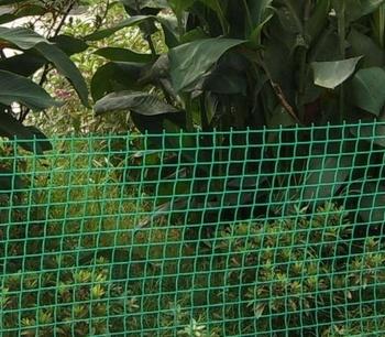 Garden Plastic Lattice Fence