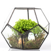 Pentagon Ball Shape Open Glass Geometric Terrarium Box Tabletop Succulent Plant Planter Fern Moss 6.89*6.89*5.9inches