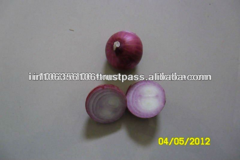 Fresh Red India Onion